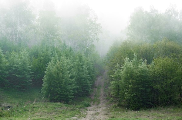 Немного туманного Кульдура Туман, Природа, Атмосфера, Сталкер, Длиннопост
