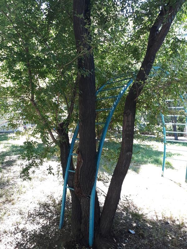 Коротко о том как у меня дела КАК?, все в порядке это Россия, длиннопост, дерево, фотография