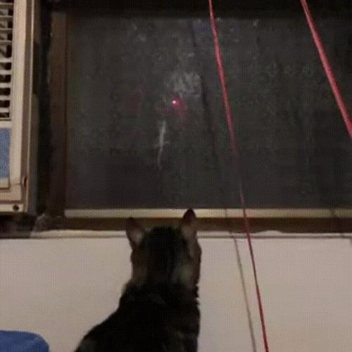 Если Вы не знаете чем занять своего кота