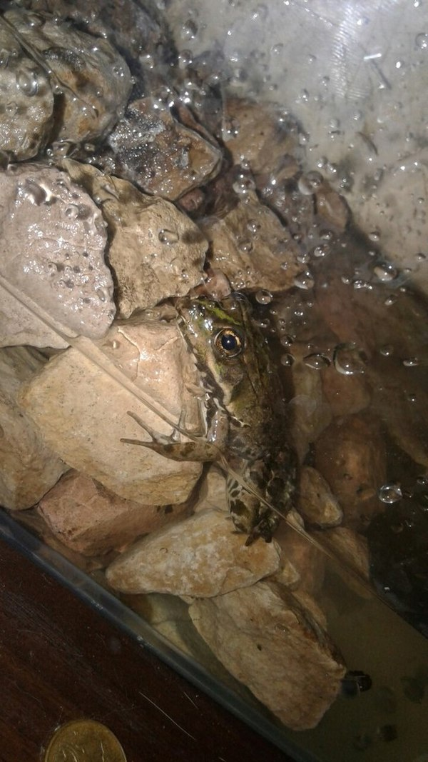 Ну, предположим, ква. лягушка, аквариум, кот, живность, лягушка пепе, длиннопост