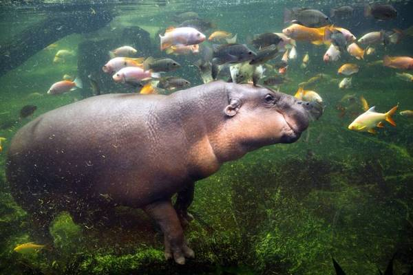 Животные под водой Животные, Под водой, Подборка, Не мое, Из сети, Длиннопост