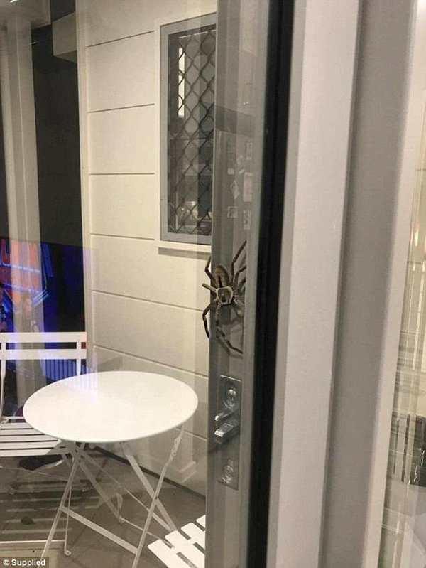 Зима. Вечер. Австралия Паук, Австралия, Членистоногие, Фауна, Страх, Длиннопост