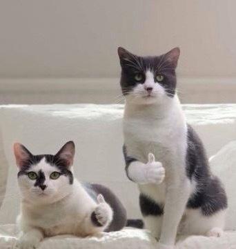 В Сети появился сайт для любителей кошачьего мурчания Кот, Мурчание, Не реклама, Длиннопост