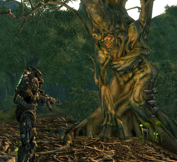 Есть потенциально бессмертные существа Fallout 3, fallout, дерево, наука и техника, Бессмертие, биология, ботаника