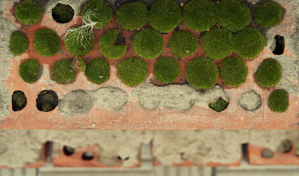 Мох кирпичей мох, фотография, макро, моё