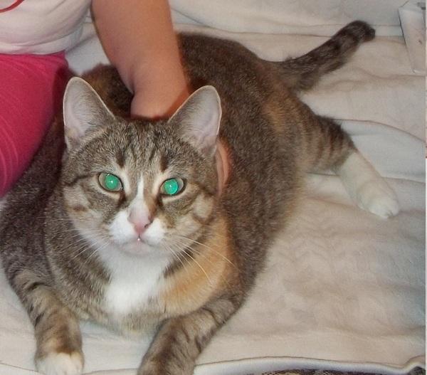 Помощи пост! кот, Помощь, новая семья, Дети, аллергия, новосибирск