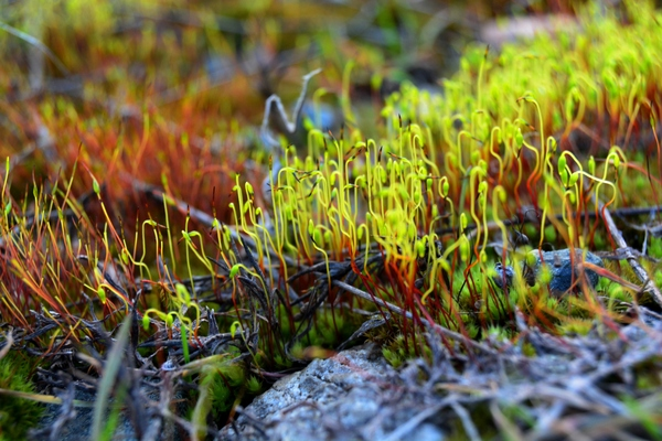 Под ногами фотография, Природа, мох, макро