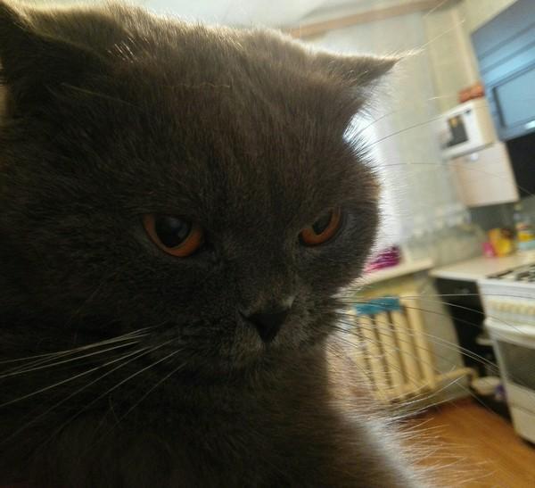 Злость и ненависть кот, злость, ненависть, человечишка