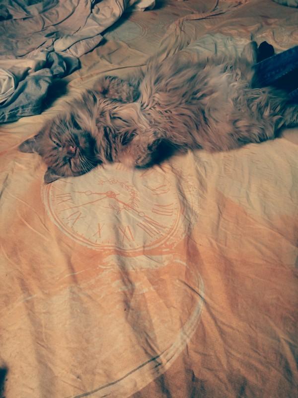 Ну ты уже ушел на работу или нет? хитрая рыжая морда, Рыжая, каждое утро, я за это её ненавижу, привет pikabu, кот