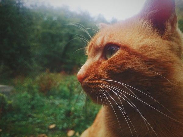 """Кот по кличке """"Фрискис"""", обожаю этого рыжика. (дом в лесу у знакомых)"""