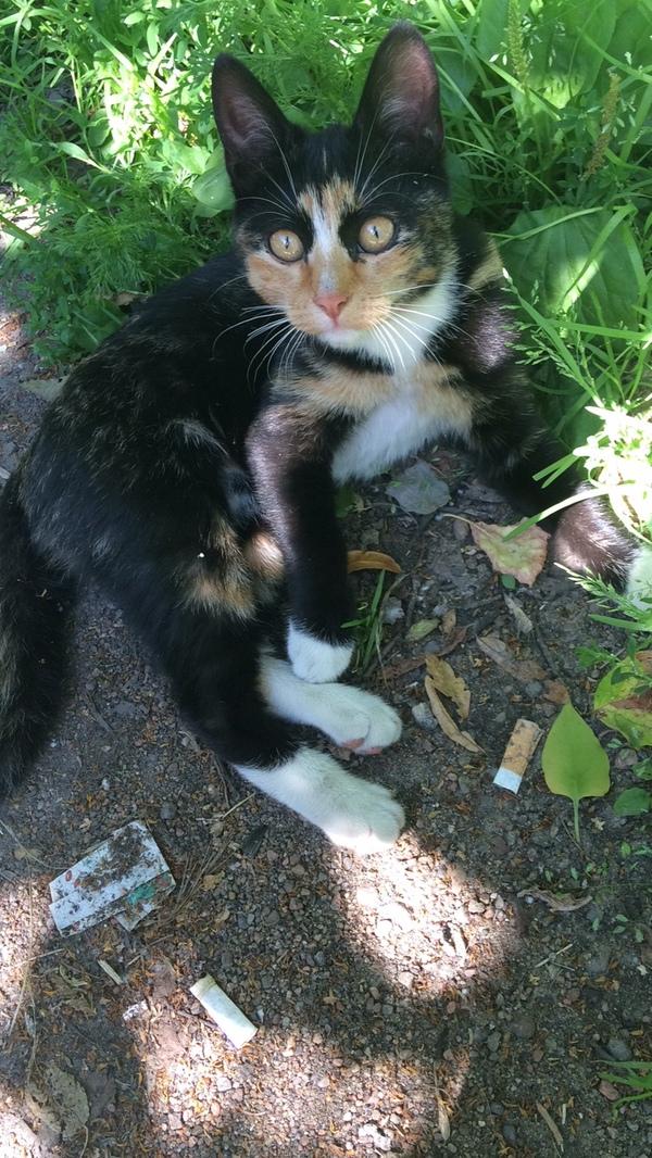 Возьмите, а? Спб Помощь, найден кот, возьмите к себе, Санкт-Петербург, кот, девочка