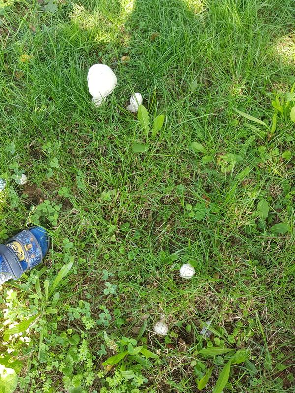 Вопрос к Грибникам-Экспертам Неизвестные грибы, Грибы, Длиннопост