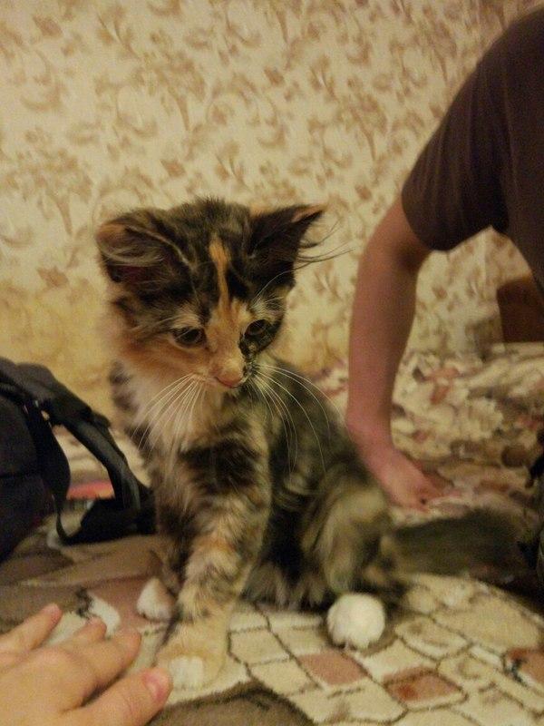 Ищу добрых хозяев для прекрасного чуда. Москва. кот, котенок ищет семью, ищу хозяина, добро, длиннопост