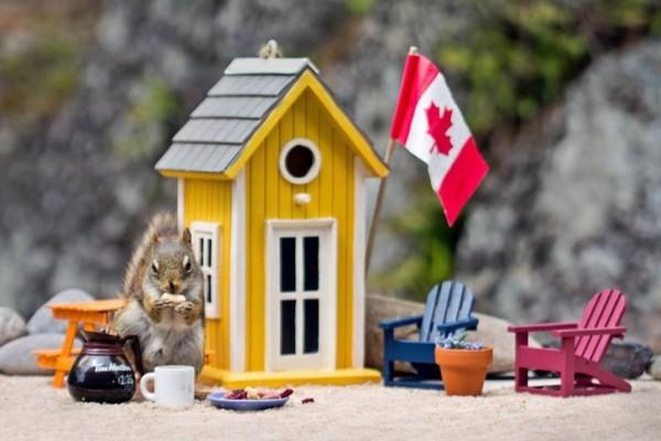 Жизнь и работа в Канаде. Перспективы. Понаехали in Canada. канада, Торонто, США, пора валить, переезд, иммиграция, текст, длиннопост