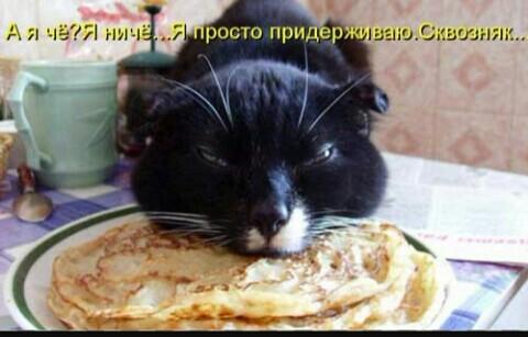 TOP 10 cat ! cat ! cat ! кот, лол, длиннопост, котоматрицы