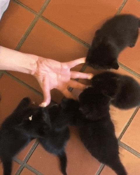 Черныши и пальчики