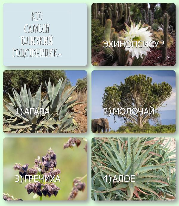 """Небольшой тест """"Загадки систематики: ботаника"""" Тест, систематика, растения, биология, палеонтология, Эволюция, длиннопост, ботаника"""