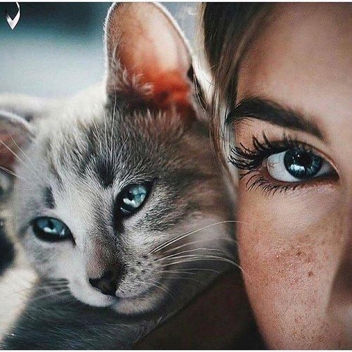 Красивый котик:3