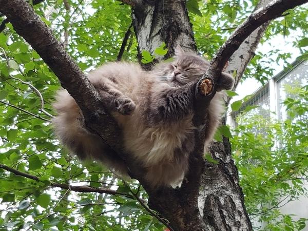 Я не кот, я гнездо