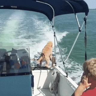 Дельфин пытается подружиться с собакой.