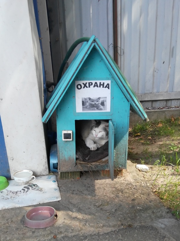 Охрана охраны охрана, безопасность, котомафия, забавные котики, кот