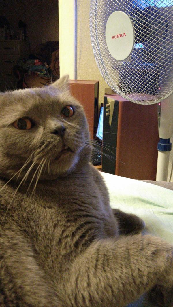 """""""Селфи"""". Кот и мой вентилятор."""