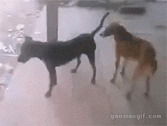 Собаки явно не понимают суть процесса. Собака, Секс, Спаривание, Гифка