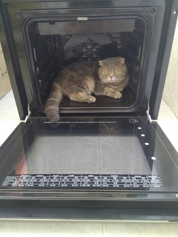 Котейкин пост кот, питомец, домашний любимец, шерсть, длиннопост