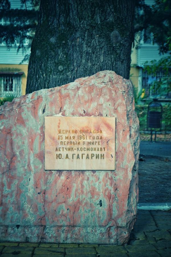 Гуляя по улице Гагарина в Сочи фотография, Гагарин, сочи, Краснодарский Край, кедр, память, длиннопост