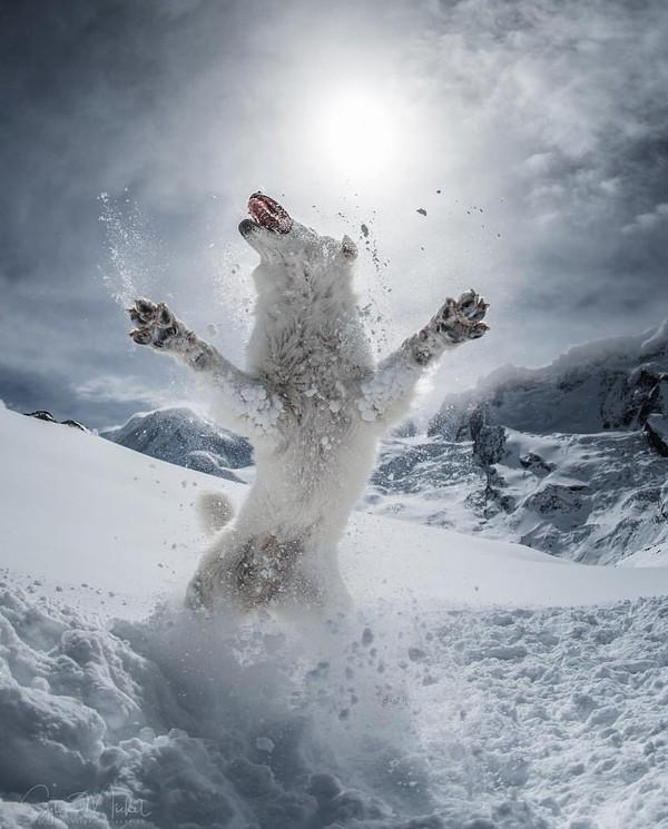 Я шерстяной волчара,боже, как я хорош, как мощны мои лапищи не мое, волчара, юмор, Снег