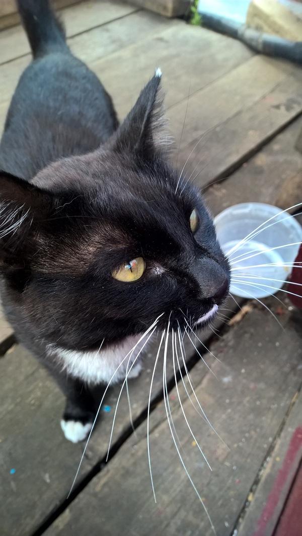 Он хочет стать популярным кот, популярность