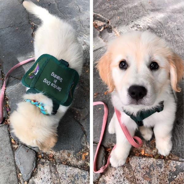 Надпись на рюкзачке – «Служебная собака на практике»