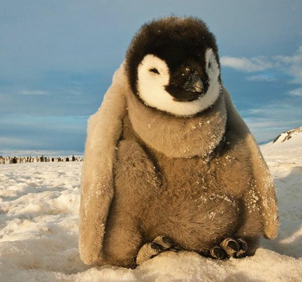 Замерший пингвинчик