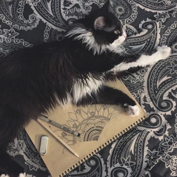 Котовский день кот, дарт вейдер, Котовский праздник, кот и его раб, длиннопост