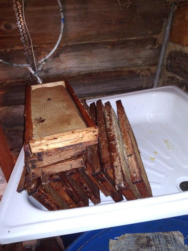 Сбор мёда на домашней пасеке Мед, Процесс, Длиннопост, Моё, Пчелы