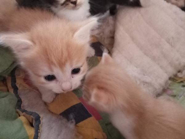 Помогите спасти котят помощь животным, в добрые руки, кот, Помощь, длиннопост
