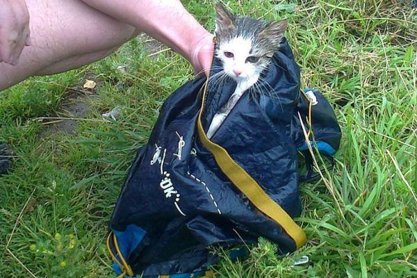 Робинзон Крузо с необитаемого острова в Черном озере кот, история спасения, робинзон крузо, длиннопост
