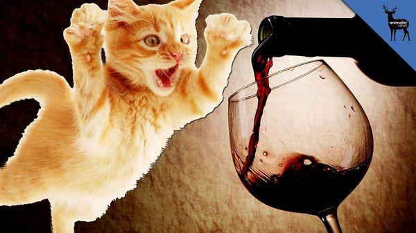 Конфеты из красного вина Вино, рецепт, конфеты, здоровье