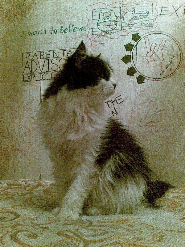 Ода моим котам. кот, всемирный день котов, в добрые руки, забавные котята, жизненная история, друзья, длиннопост