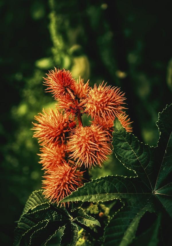 Больше цвета цветы, Природа, Лига фотографов, длиннопост