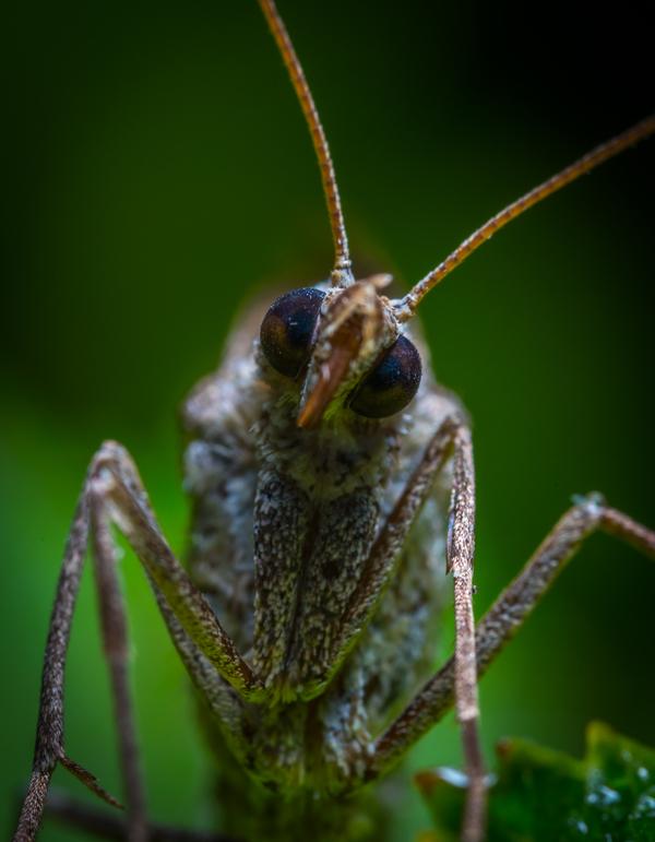 Любопытная бабочка заглядывает в объектив
