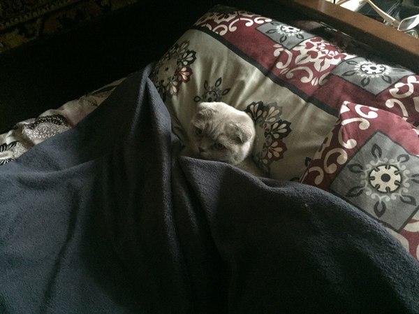 Кроватный оккупант