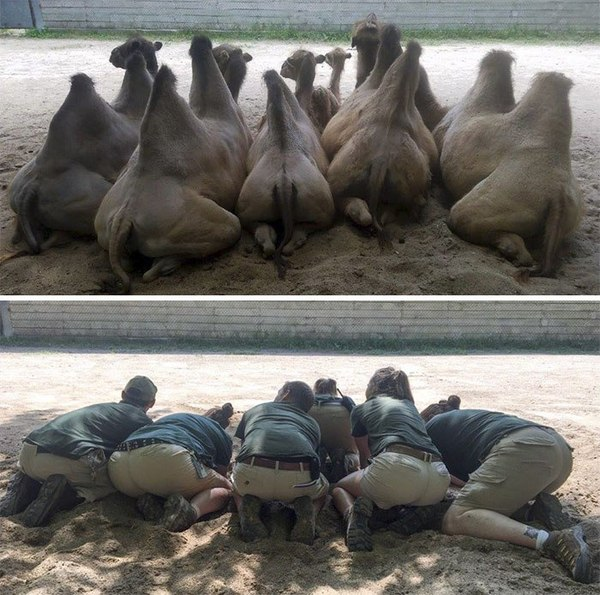 """Когда на работе много свободного времени"" зоопарк, Минесота, креатив, Сотрудники, длиннопост, Подборка"