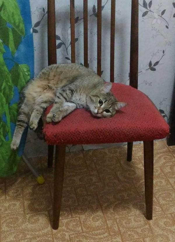 Подборка Кот, Кошка Масяня, Трехцветная кошка, Фотография, Длиннопост
