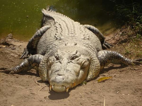 15 самых жутких созданий Австралии (16 фото) Австралия, Животные, Ядовитые животные, Опасные животные, Ядовитая змея, Паук, Страшные существа, Длиннопост