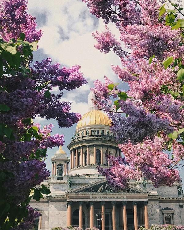Исаакиевский собор в цветах. цветы, Исаакиевский собор, красота