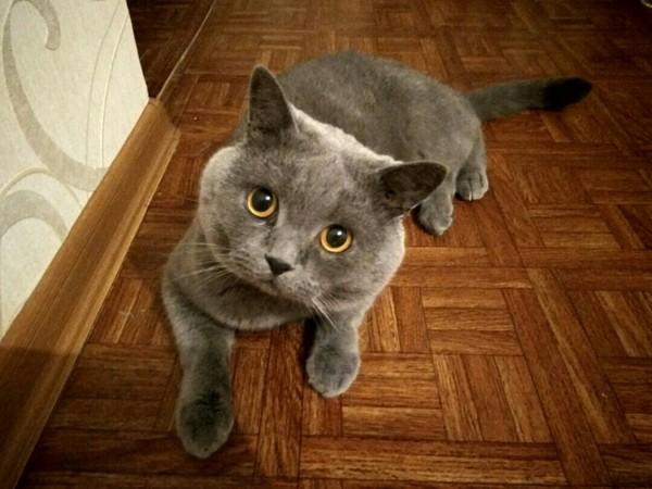 Фунт который дороже золота кот, котомафия, найденыш, Донецк