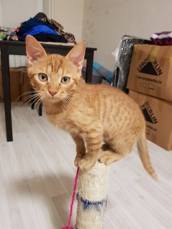 Котята в добрые руки! Москва, САО кот, в добрые руки, москва, домашние животные, помощь, длиннопост
