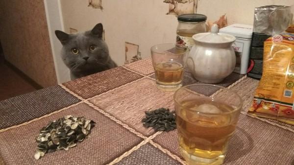 Пятничный вечер сильного и независимого кот, котомафия, пятница, пиво, пятничный тег моё, отдых