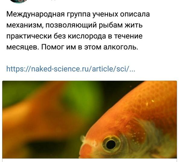 Учёные - алкоголики? заголовок, Рыба, алкоголь